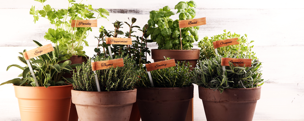 Herb garden as Mother's Day surprise