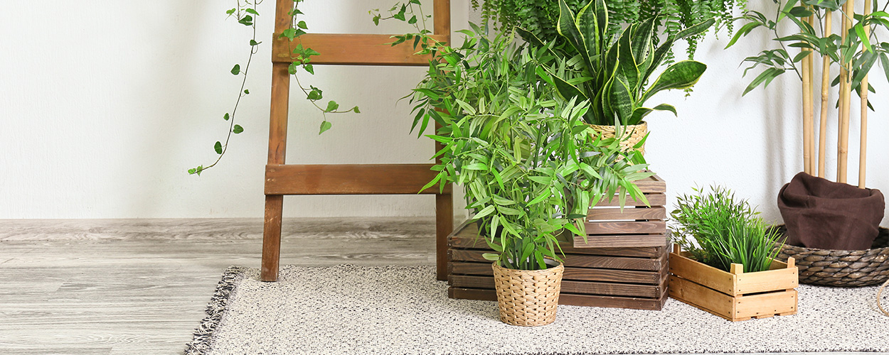 Houseplants as 2021 design trend