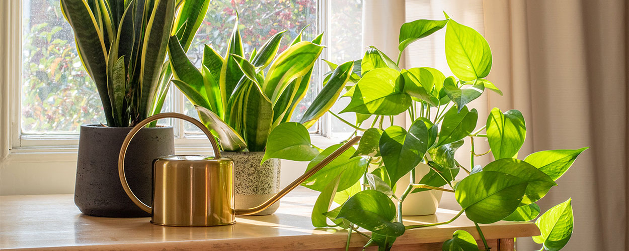 Houseplants as summer decoration for home