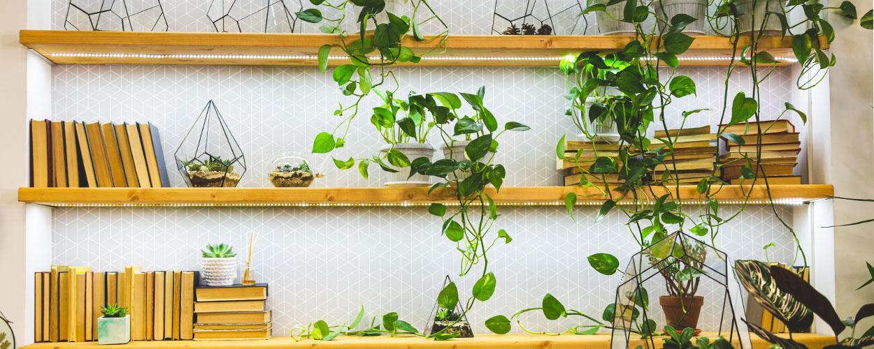 Floating wall shelf idea with plants